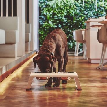 Dog feeder MiaCara Desco bois naturel