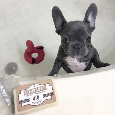 Natural Dog Company - Shampoing hydratant