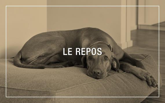 Paniers haut de gamme pour chien - design et qualité